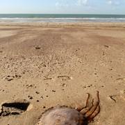 <strong>Zeeuwse kust 9</strong>