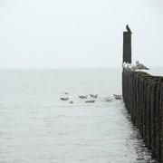 <strong>Zeeuwse kust 7</strong>